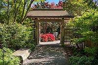 Yao Japanese garden Spring
