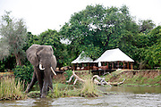 Elephant outside Sausage Tree Camp..Lower Zambezi National Park, Zambia, Africa..© Zute Lightfoot