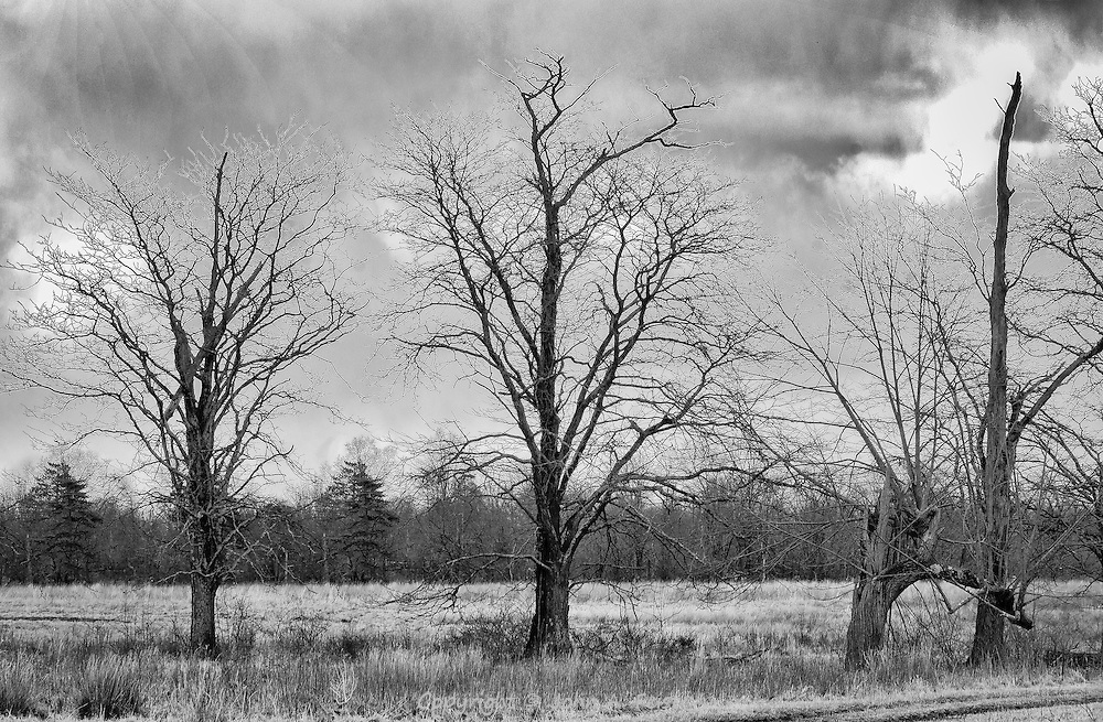 I just like the feel of these three trees standing together.  They form a stark contrast to a mostly grey sky.  You can see a peek of sun in the top left.