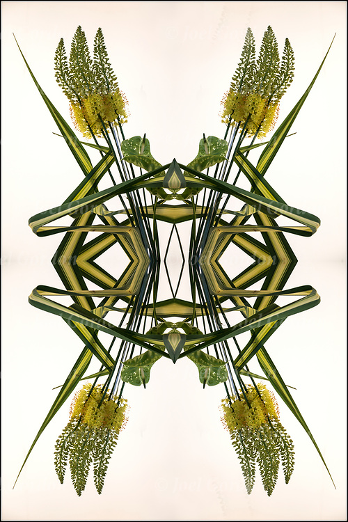 Photographic series of digital computer art from an image of exotic tropical floral arrangement <br /> <br /> Two or more layers were used to enhance, alter, manipulate the image, creating an abstract surrealistic mirrored symmetry.