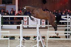 037, Pompidou Du Marais DD<br /> Hengstenkeuring BWP - Lier 2018<br /> © Hippo Foto - Dirk Caremans<br /> 20/01/2018