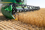 combine harvester harvesting wheat. Photographed in Israel, Kibbutz Ruhama, Negev Desert, in June
