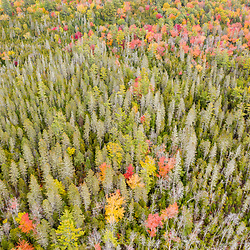 Fall foliage at the Witt Swamp Preserve in Norway, Maine. Fall.