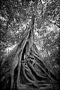 Black & White photographs from Sri Lanka