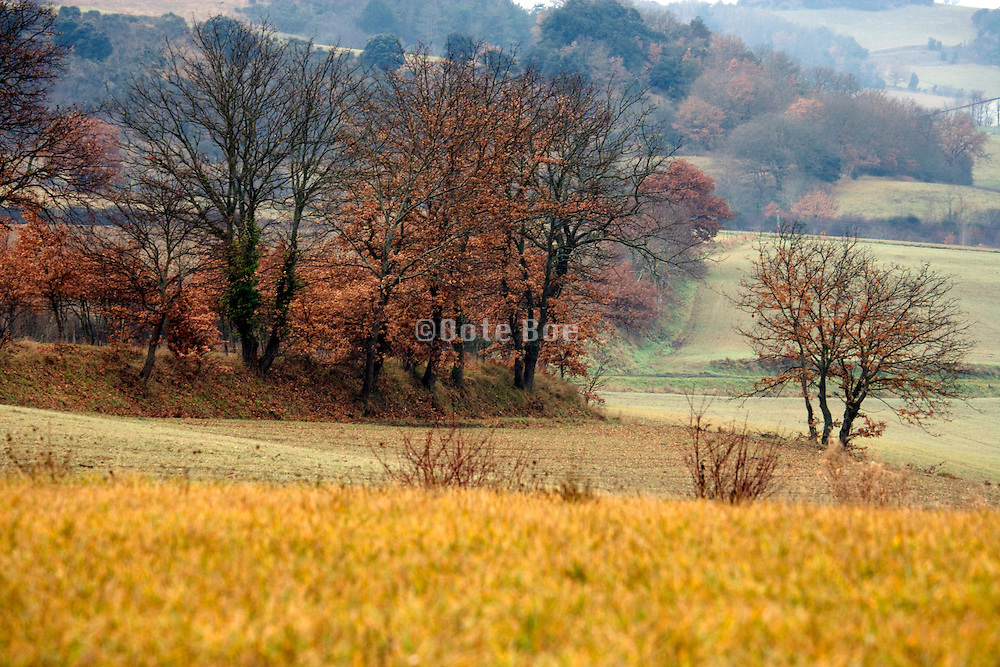 autumn wood and agricultural hilly landscape
