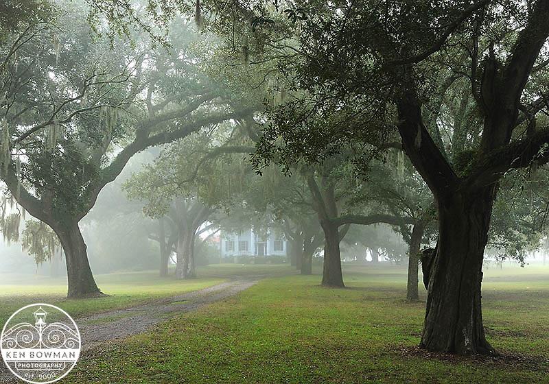 McLeod Plantation foggy morning sunrise.