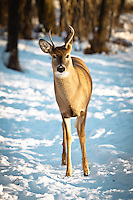 After a couple of weeks of -20 °C weather (or worse) we finally had a beautiful day in Calgary so we took advantage of it and went for a walk. It was a wonderful sunny day and all the birds and animals in the park were frisky and wanting some attention!..©2010, Sean Phillips.http://www.RiverwoodPhotography.com