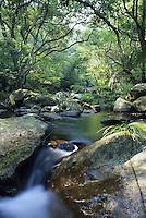 A rainforest stream, Tai Po Kau Nature Reserve, Hong Kong, China.