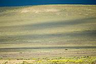 bontebok, Damaliscus pygargus, Buntbock, 白纹牛羚,