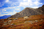 Mountain goat and kid on autumn tundra on Mount Evans Wilderness Colorado
