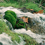 """Moss covered rocks in a small creek waterfall in the Texas Hill Country. NOTE: Click """"Shopping Cart"""" icon for available sizes and prices. If a """"Purchase this image"""" screen opens, click arrow on it. Doing so does not constitute making a purchase. To purchase, additional steps are required."""