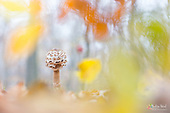 Mushrooms | Pilze