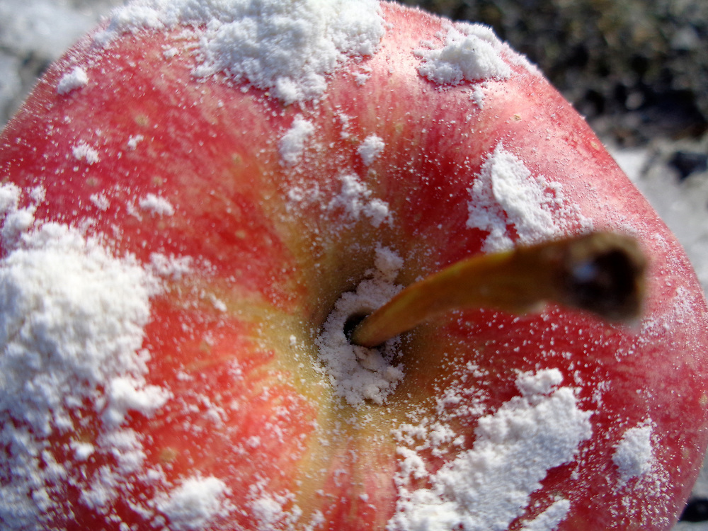 Apple and snow ©Age Bergseterej/ Moro Foto
