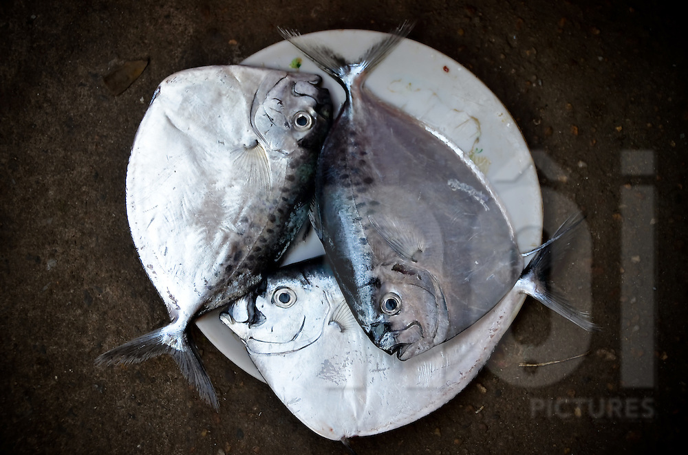 Three fishes on a plate at the market Hoi An, Vietnam, Asia