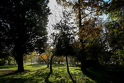 © Licensed to London News Pictures. 08/11/2019. London, UK. Sunshine breaks through in Finsbury Park after thick fog in north London. Photo credit: Dinendra Haria/LNP
