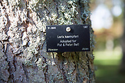 Tree species identification label, National arboretum, Westonbirt arboretum, Gloucestershire, England, UK - Larix Kaempferi, Pinaceae pine tree