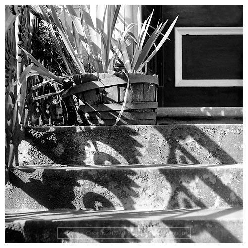 Black and white photograph of shadow cast by railings on steps outside tenement building in Glasgow's West End. Mounted print available to purchase.