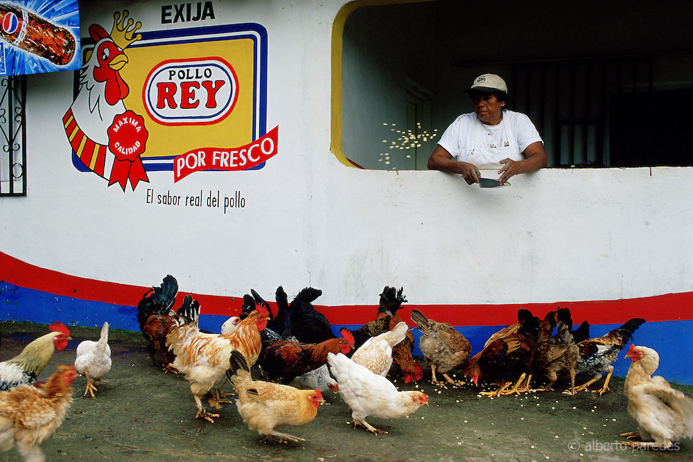 HONDURAS / Department of El Paraiso / Yuscaran. Hens and cocks in a restaurant on the road to Yuscaran.....