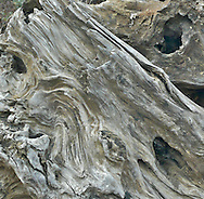 detailed image of driftwood on beach