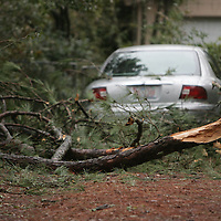 A tree limb blocks a driveway on McDonald Drive in Wilmington, N.C. Thursday February 13, 2014. The area saw two days of freezing rain that caused a loss of power for much of New Hanover, Pender, and Brunswick counties.   (Jason A. Frizzelle)