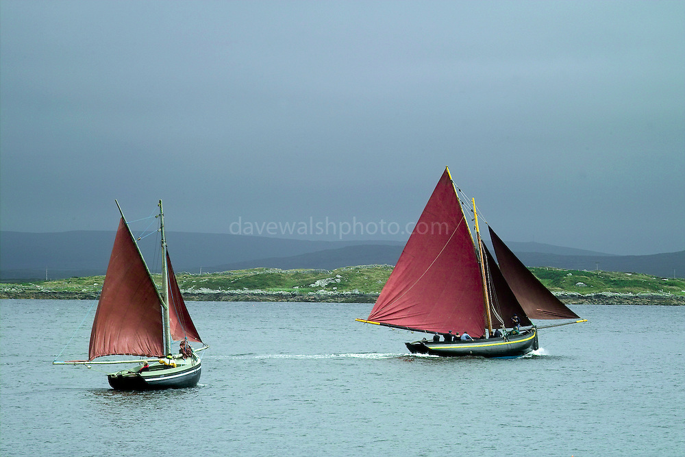 Galway Hookers - traditional Irish sailing boats - putting out to sea for a race, Roundstone Regatta, July 2004