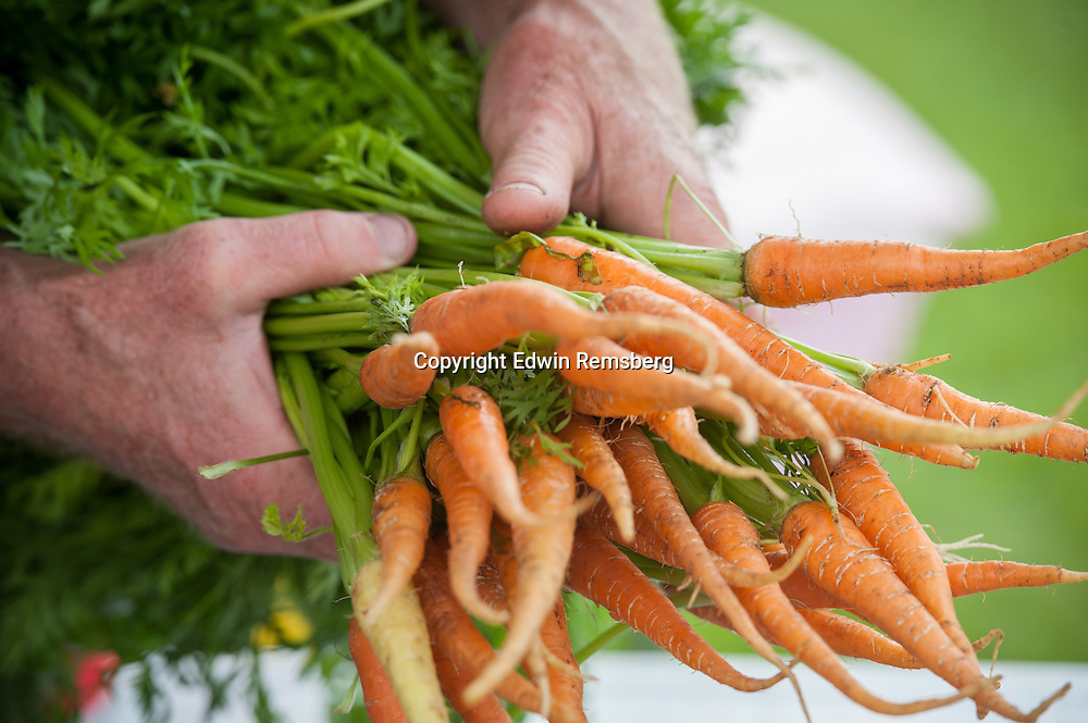 Man holding out a bundle of carrots (carota)
