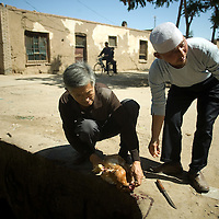 Chinese muslims kill a chicken outside of the  Dujia Tan Mosque in northwest China's Ningxia Hui Autonomous Region, China, on Thursday, September. 11, 2008. The islam is the second biggest religion in China, where there are between 20 and 30 millions of muslims.