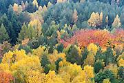Herbstwald, Gohrisch, Sächsische Schweiz, Elbsandsteingebirge, Sachsen, Deutschland | autumn forest, Gohrisch, Saxon Switzerland, Saxony, Germany