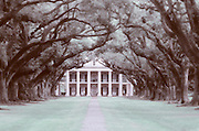 Image of the Oak Alley Plantation on the Mississippi River in Vacherie, Louisiana, American South
