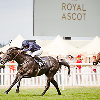 Caravaggio (R. Moore) wins The Commonwealth Cup Gr.1, Royal Ascot 23/06/2017, photo: Zuzanna Lupa / Racingfotos.com