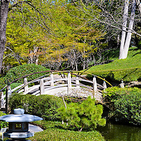 Moon Bridge at Japanese Gardens in Fort Worth, TX