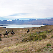 Horse trekking on top of Mount John overlooking Lake Tekapo and the Mackenzie Country, South Island, New Zealand. 24th February 2011, Photo Tim Clayton.