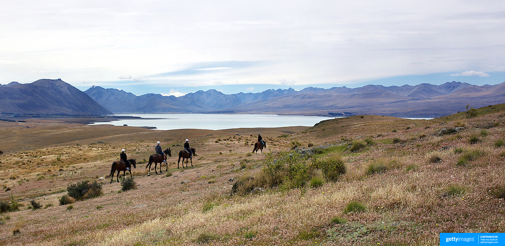 Horse trekking on top of Mount John overlooking Lake Tekapo and the Mackenzie Country, South Island, New Zealand. 24th February 2011, Photo Tim Clayton.