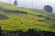 Grass of Switzerland