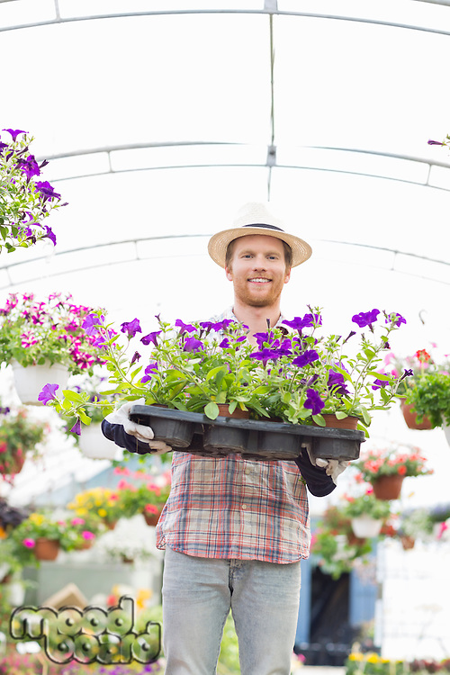 Portrait of happy gardener holding flower pots in crate at greenhouse