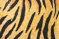 Tiger Stripes on Rain Bird 2008 Tournament of Roses Rose Float, Pasadena, California