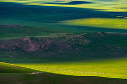 August 8, 2017 - Inner Mongolia, Inner Mongolia, China - Inner Mongolia, CHINA-August 8 2017: (EDITORIAL USE ONLY. CHINA OUT) ..The Wulagai Grassland is dubbed as 'Grassland over the Horizon' in XilinGol League, north China's Inner Mongolia Autonomous Region. (Credit Image: © SIPA Asia via ZUMA Wire)