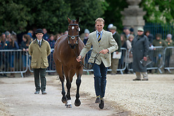 Gauntlett Nick, (GBR), El Grado<br /> First Horse Inspection - Mitsubishi Motors Badminton Horse Trials <br /> Badminton 2015