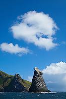 Colonia de alcatraz atlántico, Gannet (Sula bassana). Archipielago St. Kilda. Outer Hebrides. Scotland, UK