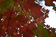 Fall 2012