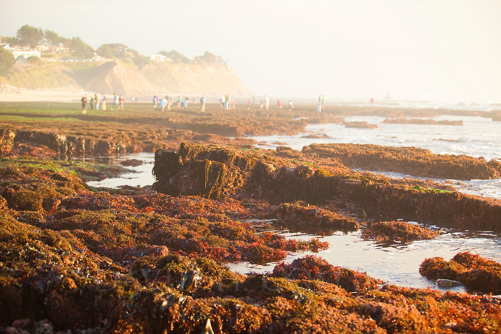 Tide Pools, Fitzgerald Marine Reserve, Moss Beach, California