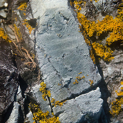 Rock Face with Lichen, Ram Island, Castine, Maine, US