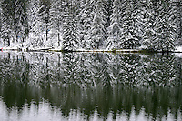 New snow on trees lining shoreline reflected in lake Cypress Hills Park Saskatchewan Canada