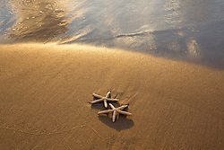 two starfish on the sand at the ocean in Florida