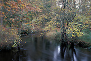 Mullica River in autumn; NJ, Pine Barrens; Wharton State Forest