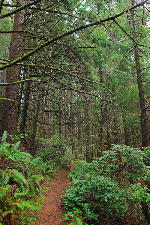 Forest Trail Thomas Creek Overlook - Oregon Coast