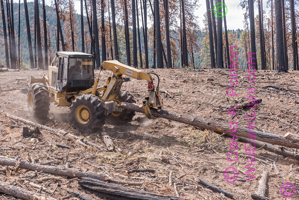 Log skidder drags a fire-killed ponderosa pine log, salvaged from the El Cajete Fire burned area 10 months after the 2017 fire. Fire-killed trees are still standing in the background. © 2018 David A. Ponton