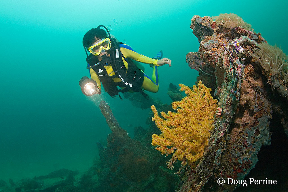 diver examines soft coral growing on the wreck of the San Quentin or San Quintin, a Spanish gunboat sunk in 1898 during the Spanish-American War between Grande and Chiquita Islands at the entrance to Subic Bay, Philippines; wreckage is scattered over a reef at a depth of 9-18 m; MR 379