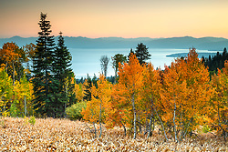"""Aspens Above Lake Tahoe 13"" - Photograph of yellow and orange aspen trees in the Fall at a grove above Lake Tahoe."