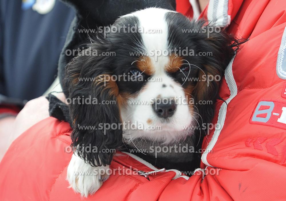 07.02.2016, Kandahar, Garmisch Partenkirchen, GER, FIS Weltcup Ski Alpin, Garmisch Partenkirchen, Super G, Damen, Siegerehrung, im Bild Hund von Lindsey Vonn (USA 3.Platz) // Dog of Lindsey Vonn (USA 3.Platz) on podium of the ladies Downhill of Garmisch FIS Ski Alpine World Cup at the Kandahar in Garmisch Partenkirchen, Germany on 2016/02/07. EXPA Pictures © 2016, PhotoCredit: EXPA/ Erich Spiess